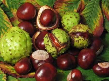 Kastanjes de vruchten