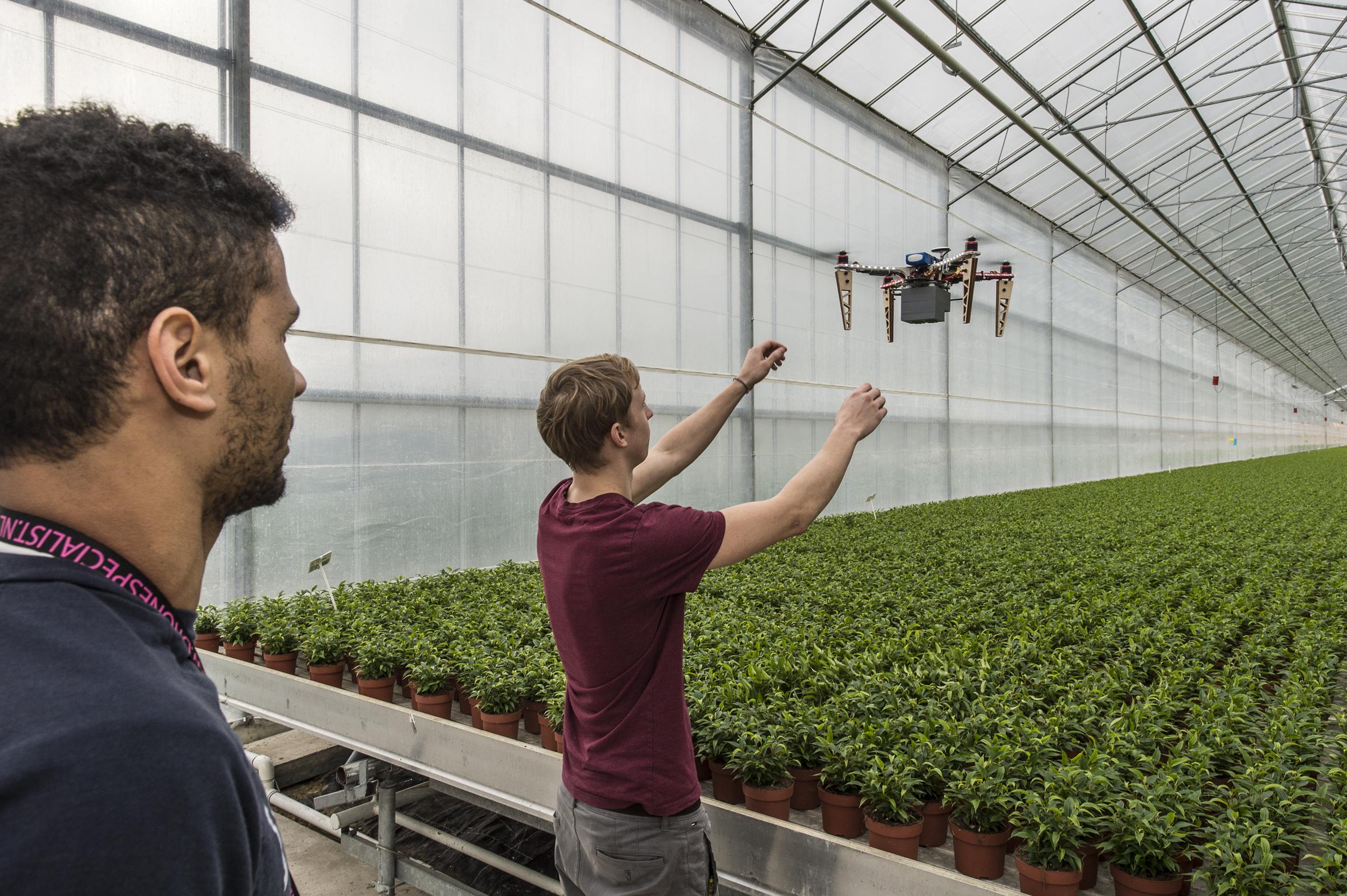 Een drone met infraroodcamera zoekt naar zieke planten. Bron: Hogeschool Inholland